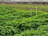 安康农业学校专业设置